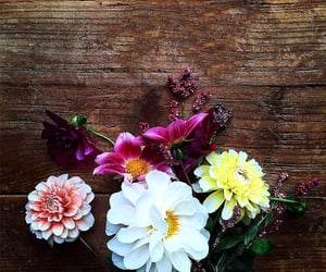 flowers and flowers blooming image