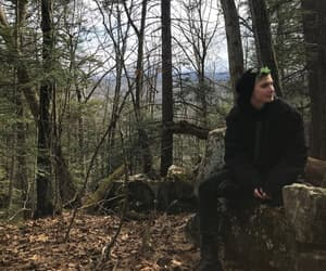 forest, trees, and green hair image