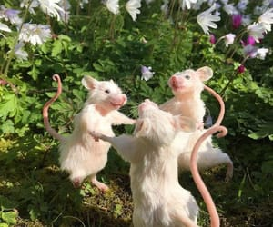 animals, funny, and mouse image