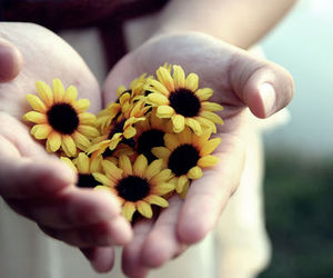 flowers, hands, and photography image