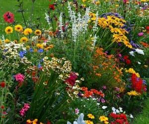 flowers, garden, and gardening image