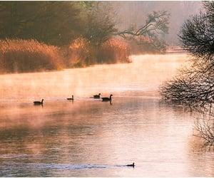 autumn, ducks, and sunrise image