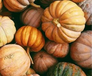 pumpkin, autumn, and wallpaper image