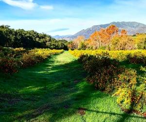 calif, ojai, and clementine grove image