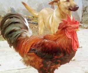 dog, dog training, and dogs of instagram image