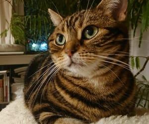 cat, instagram, and mog image