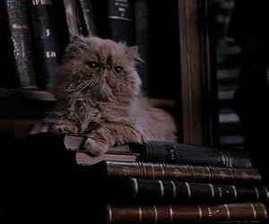 harry potter, cat, and hogwarts image