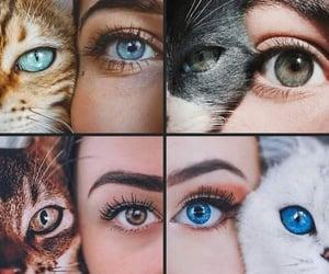 Animales, fondo de pantalla, and animals image