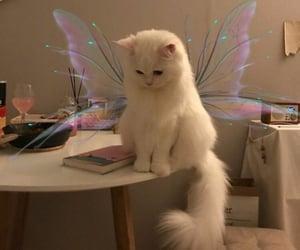cat, edit, and gato image
