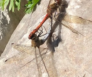 dragonfly, fauna, and garden image