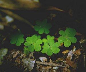 green, lucky, and nature image