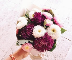 flowers, pastel colours, and flowers blooming image