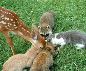Puede ser una imagen de animal y al aire libre