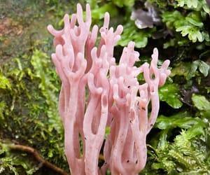 coral fungus, mushroom species, and genus clavaria image