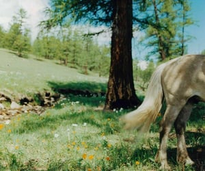 green, horse, and nature image