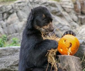 bear, friday, and cute animals image