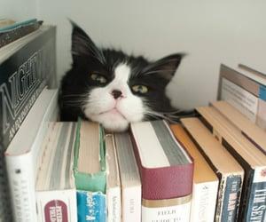 gato, Gatos, and pet image