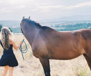 freedom, girl, and horse image