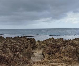 beach, coral, and hawai'i image