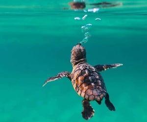 sea life image