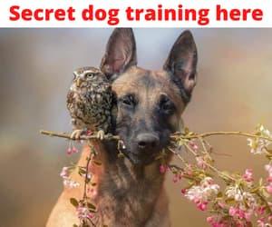 animal, dog, and dog behavior image