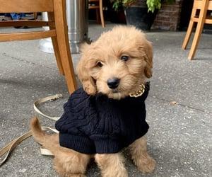 dog, fashion, and puppy image