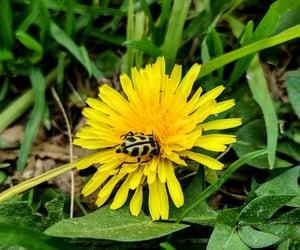 amarillo, flower, and naturaleza image