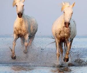 Seashore galloping