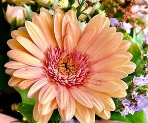beautiful, flower, and çiçek image