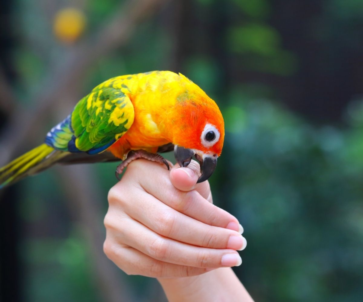 article and parrot training image
