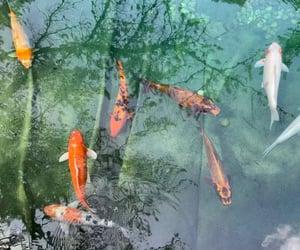 garden, koi, and koi fish image