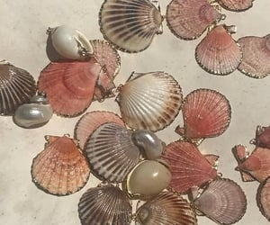 aesthetic, pink, and shell image