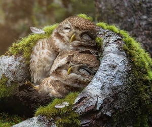 cuddling, owls, and photograph image