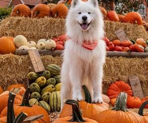 pumpkin, puppy, and animals image