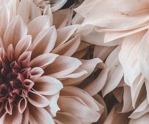 beige, blumen, and white image