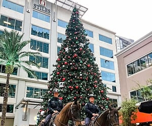 christmas tree, broward, and courtyard image