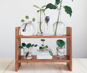 botany, indoor plants, and house plants image