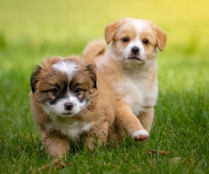 two puppies enjoying play at outside