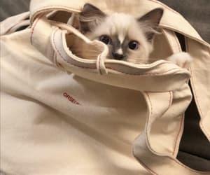 cat, kitten, and Q image