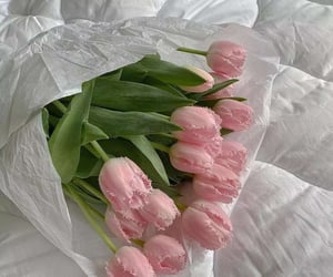 Pink Tulips   @eve365
