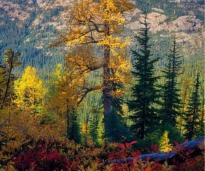 """""""The Larch""""."""