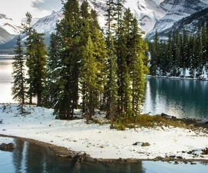 agua, flora, and naturaleza image