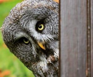 autumn, beautiful, and owl image