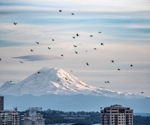 beautiful places, birds, and blue sky image