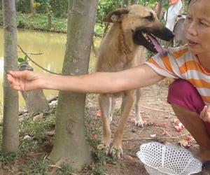 dog, dog training, and dog lover image