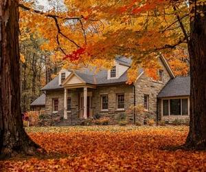 aesthetic, autumn, and orange image
