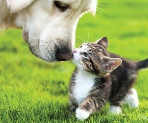 cat, dog, and animals image