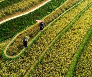 farm, landscape, and terraces image