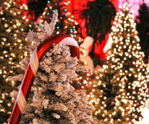 """xochristmas:""""a-lovely-christmas:""""alittlechristmasforyou:""""A little Christmas for you 🎅🎄⛄""""❄❄❄May Your Blogs Be Merry And Bright❄❄❄""""Christmas time, all the time! 🎄⛄"""""""