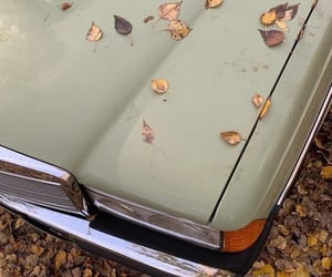 aesthetic, autumn leaves, and sage green image